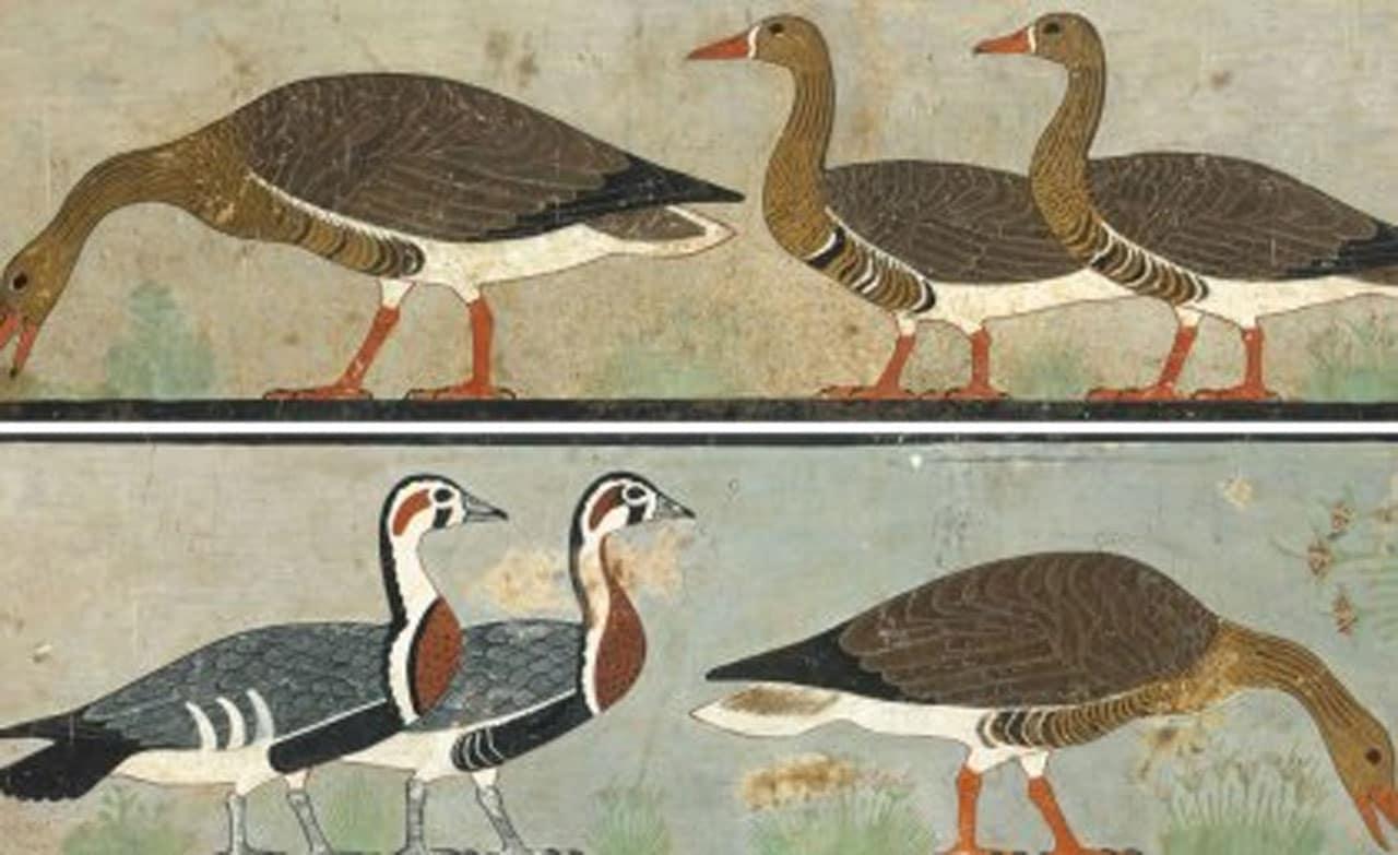 La pintura del Antiguo Egipto muestra un ganso extinto