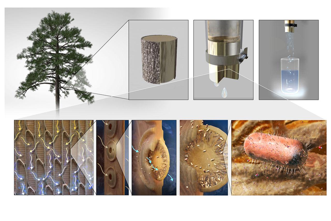 El filtro MIT prototipo produce agua potable purificada utilizando ramas de árboles