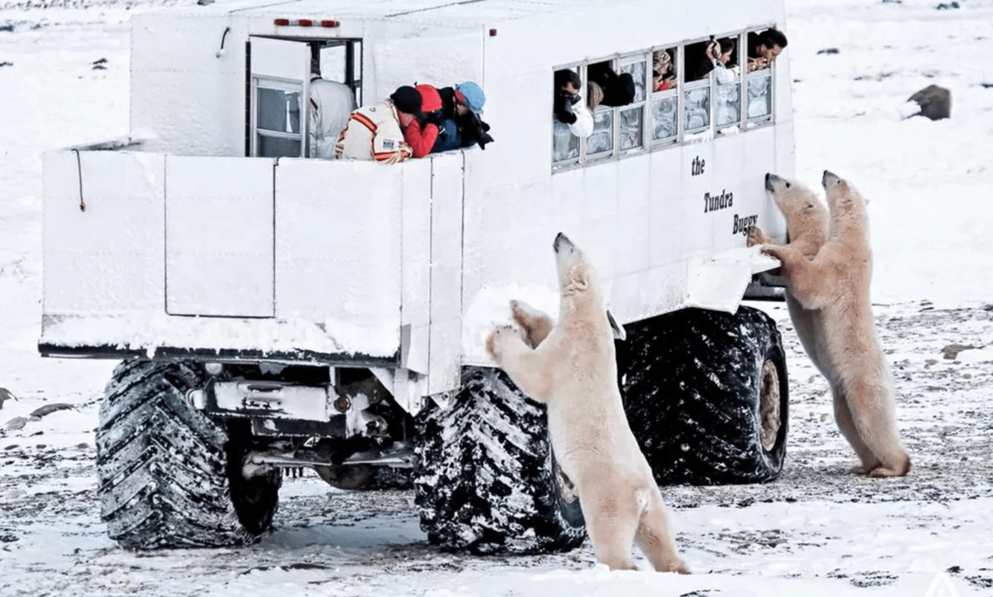 Esta semana, 8 países debatirán sobre el destino del Ártico, pero ¿por qué tanto interés en el Polo Norte?