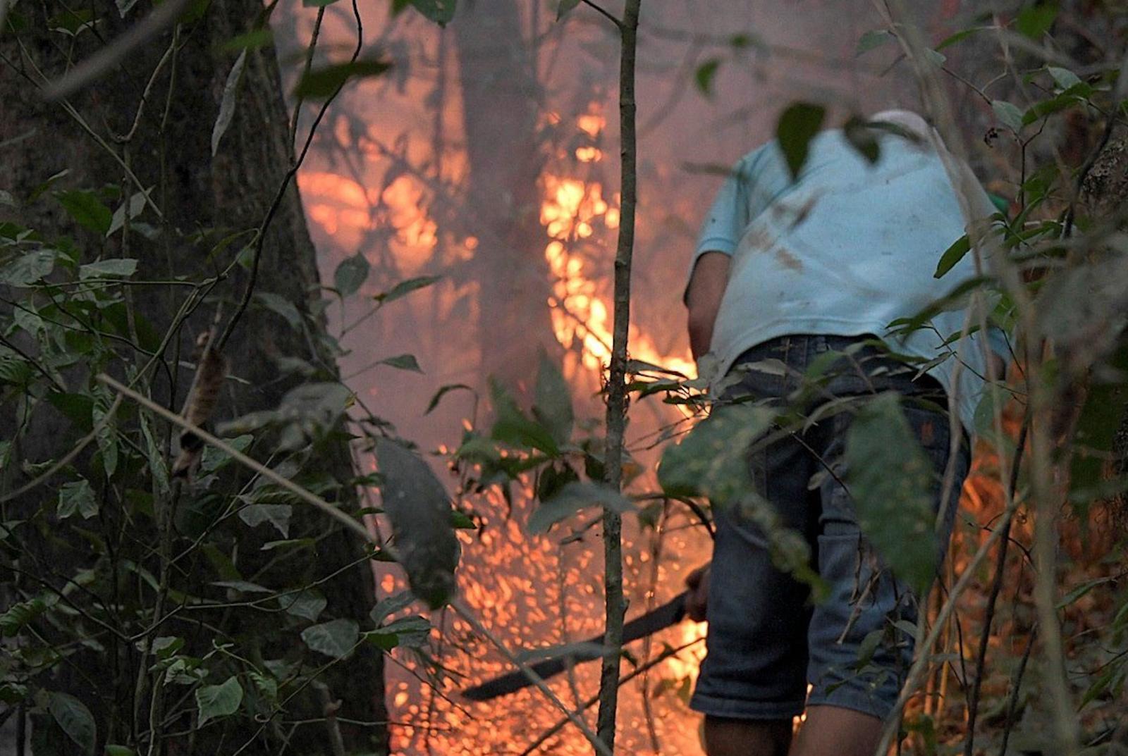 Un arma menos ante el cambio climático: la selva amazónica ahora emite más CO2 del que absorbe